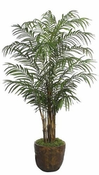 8' Areca Palm Tree - Non Potted