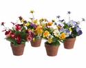 """8"""" Artificial Silk Pansy Bush Flowers in Paper Mache Pots - Sold in a set of 8 (2 each of 4 colors) Mixed Arrangements"""
