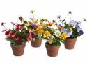 "8"" Artificial Silk Pansy Bush Flowers in Paper Mache Pots - Sold in a set of 8 (2 each of 4 colors) Mixed Arrangements"