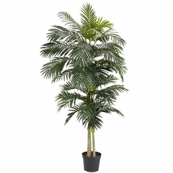 8'  Golden Cane Palm Silk Tree