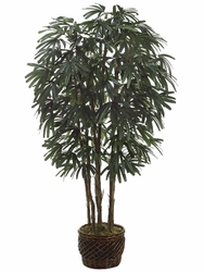 8' RHAPIS SILK PALM IN WILLOW PLANTER