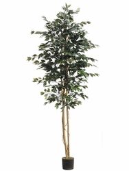 Set of 2 - 8' Silk Ficus Trees
