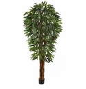 84� Raphis Silk Palm Tree