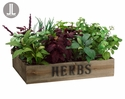 "9"" Artificial Silk Herb Garden in Clay Pot x12 in Wood Box"