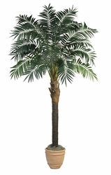 9' Bulb Areca Palm Tree - Pre Potted