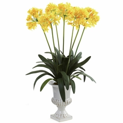 African Lily w/Urn