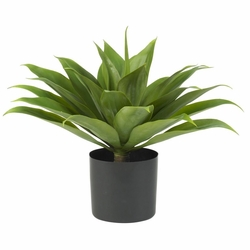 Large Agave Silk Plant Potted