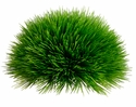 "4"" H Artificial Pine Grass Picks  - Set of 8"