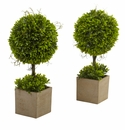 "16"" Boxwood Topiary in Planters (Set of 2)"