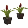 Bromeliad w/Planter (Set of 2)