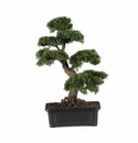 "Cedar Bonsai 24"" Silk Plant"