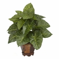 Decorative Large Taro Leaf  Plant in Container