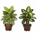 "20.5"" Dieffenbachia with Wood Vase Silk Plants (Set of 2)"