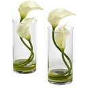 Cream Colored Double Calla Lily in Cylinder Vases (Set of 2)
