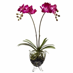 "19"" Double Phalaenopsis Elegance Arrangement"