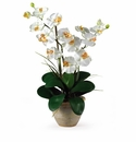 Double Stem Phalaenopsis Silk Orchid Arrangement