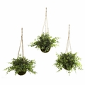 "9"" Eucalyptus, Maiden Hair & Berry Hanging Basket (Set of 3)"