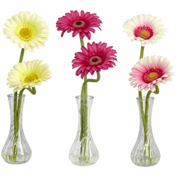 Gerber Daisy w/Bud Vase (Set of 3)