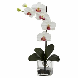 "26"" Giant Phal Orchid w/Vase Arrangement - White"
