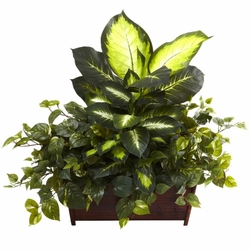 "Large 30"" Golden Dieffenbachia, Philo & Pothos w/Wood Planter"