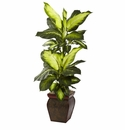 "45"" Golden Dieffenbachia with Decorative Planter"