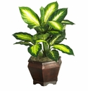 "20.5"" Golden Dieffenbachia with Wood Vase Silk Plnat"