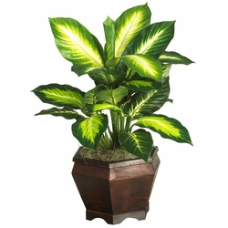 Golden Dieffenbachia w/Wood Vase Silk Plnat