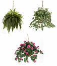 Hanging Silk Plants