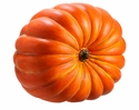 Giant Weighted Sitting Pumpkin - Limited Supply!