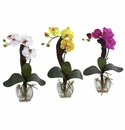 Mini Phal Orchid Arrangement (Set of 3)