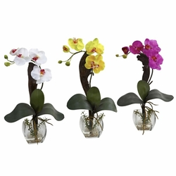 "16"" Mini Phalaenopsis Orchid Arrangement (Set of 3)"