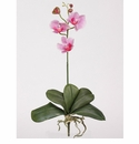 Mini Phalaenopsis Silk Orchid Flower w/Leaves (6 Stems)