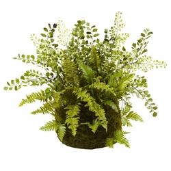 """13"""" Mixed Fern with Twig and Moss Basket"""
