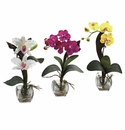 Mixed Orchid w/Cube Arrangements (Set of 3)