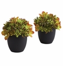 "8"" Mixed Artificial Succulent with Black Planter (Set of 2)"