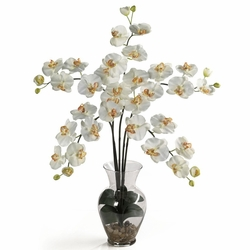 "31"" Phalaenopsis Liquid Illusion Silk Flower Arrangement - Cream"
