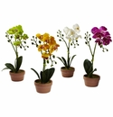 "13"" Phalaenopsis Orchid w/Clay Vase (Set of 4)"