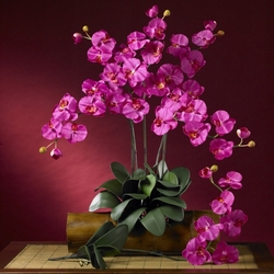 "31"" Phalaenopsis Silk Orchid Flower Stems w/Leaves (6 Stems) - Beauty Color"