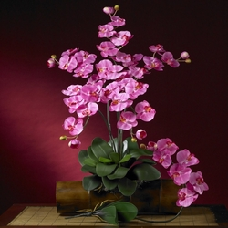 "31"" Phalaenopsis Silk Orchid Flower Stems w/Leaves (Set of 6 Stems - Non Potted) - Dark Pink"