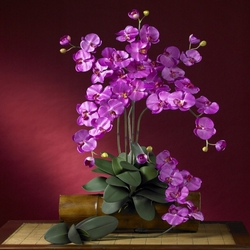 "31"" Phalaenopsis Silk Orchid Flower w/Leaves (6 Stems) - Orchid Color"