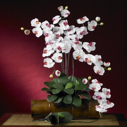 Phalaenopsis Silk Orchid Flower w/Leaves (6 Stems)