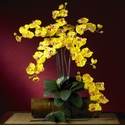 Phalaenopsis Silk Orchid Flower w/Leaves 6 Stems)