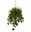 Philodendron Hanging Basket UV Resistant (Indoor/Outdoor)