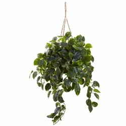 "36"" Pothos Hanging Basket UV Resistant (Indoor/Outdoor)"