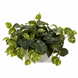 Pothos w/White Wash Planter Silk Plant
