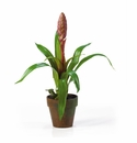 Potted Single Sword Bromeliad Silk Flower Arrangement