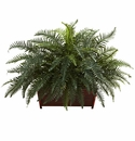 Large River Fern w/Wood Planter