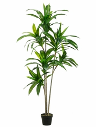 Set of 2 - 5.5' Exotic Atificial Dracaena trees