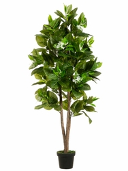 Set of 2 - 5' Fruiting Silk Trees With Flowers