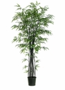 Set of 2 - 6' Black Silk Bamboo Trees